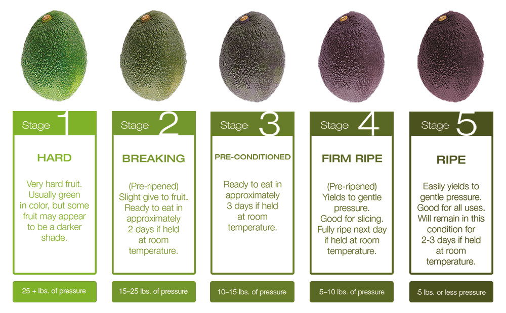 avocado stages